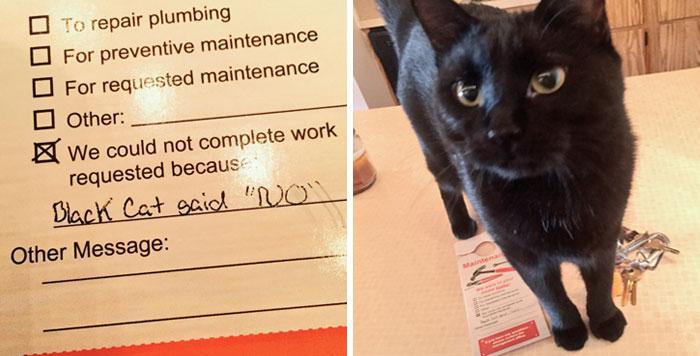 black cat says no.jpg
